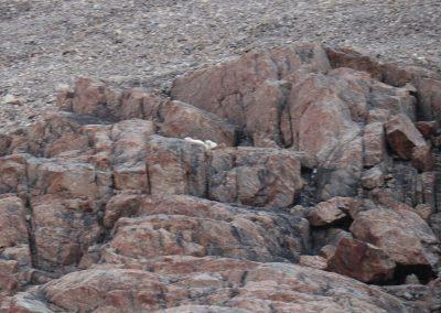 can you see polar bear