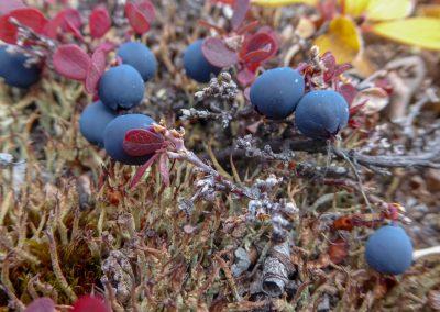 looks like blueberries