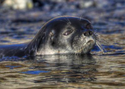 seal watching us