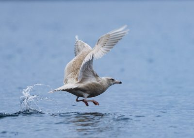 bird in action
