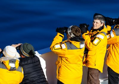looking for bowhead whales