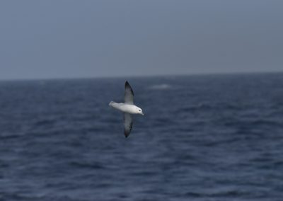 sea bird on the straight