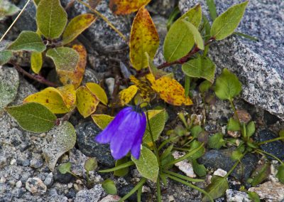 colour in the arctic